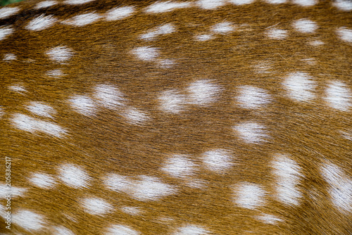 close up texture of spotted deer skin