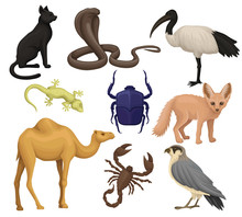 Detailed Flat Vector Set Of Various Egyptian Animals, Birds And Insects. Ibis, Fennec Fox, Scarab Beetle, Small-spotted Lizard. African Wildlife