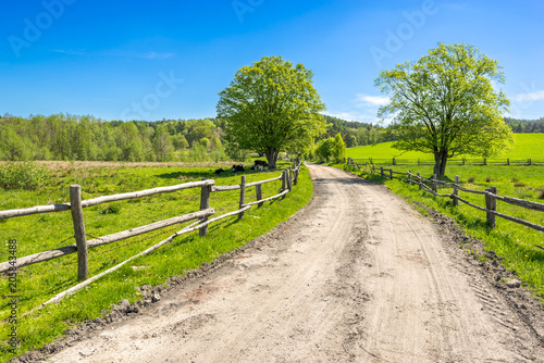 Poster Campagne Green farm landscape, field and grass under blue sky in rural scenery with country road