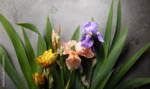 Foto op Canvas Iris Colorful iris on gray background