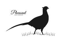 Vector Illustration: Black Silhouette Of Pheasant On White Background