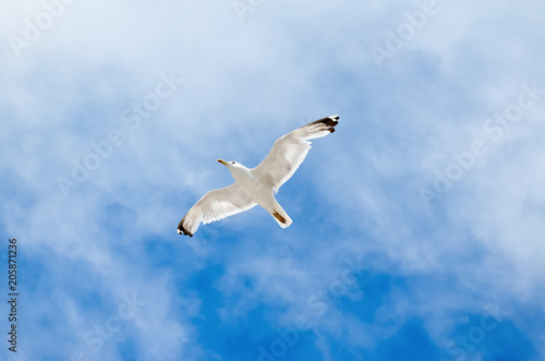 White seagull flying against the blue sky