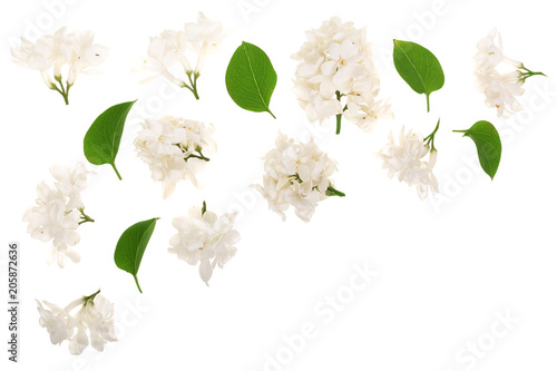 Fototapety, obrazy: light lilac flowers, branches and leaves isolated on white background with copy space for your text. Flat lay. Top view