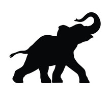 Silhouette Of A Small Elephant