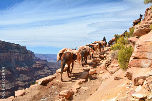 In de dag Canyon Mule pack train in Grand Canyon