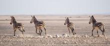 Group Of Zebras Riding On Horizon In Namib Desert At Namib-Naukluft National Park, Namibia, Africa