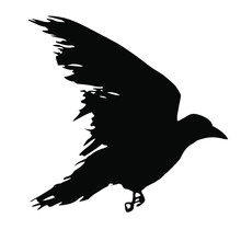 Black Silhouette Of A Raven Is...