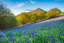 Bluebell Slope And Roseberry T...