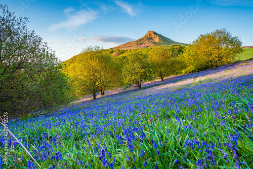 Wall Murals Northern Europe Bluebell Slope and Roseberry Topping / Newton Wood and Roseberry Topping, a distinctive hill in North Yorkshire, are popular with walkers and ramblers