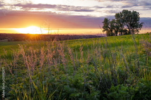 Photo Sunset meadow on farmlands