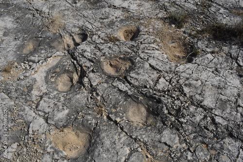 Cava Pontrelli - Altamura (Ba) - Impronte di Dinosauri Canvas Print