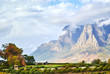 canvas print picture - Vineyard mountains in Stellenbosch valley South-Africa