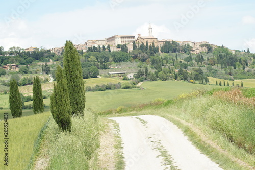 Foto op Canvas Olijf The enchanted Val d'Orcia, Siena, Tuscany, Italy