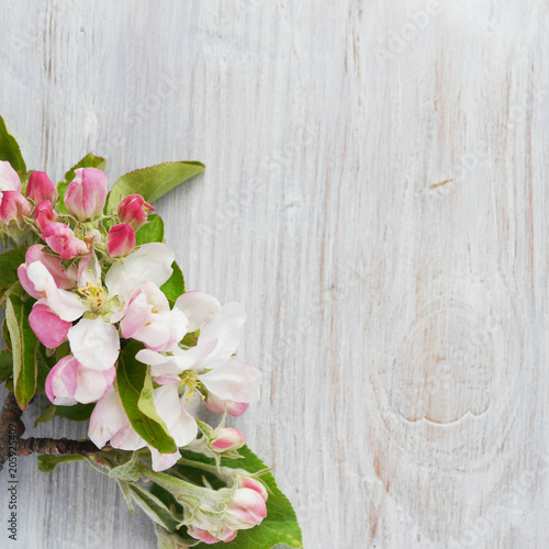 Fotografie, Obraz  Flowers of a blossoming apple-tree on a wooden bleached background, top view, flat layout