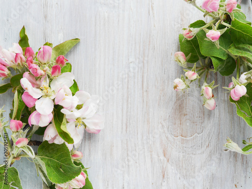 Fototapeta  Flowers of a blossoming apple-tree on a wooden bleached background, top view, flat layout