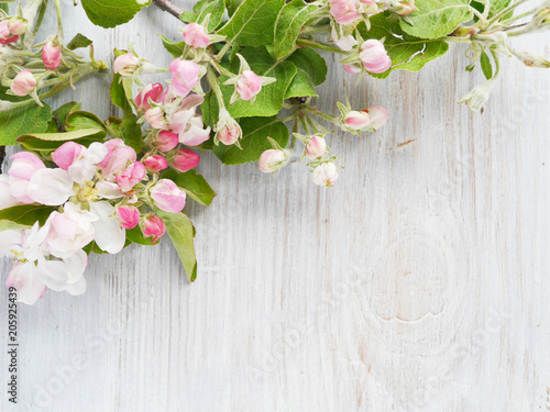 Obraz na plátně  Flowers of a blossoming apple-tree on a wooden bleached background, top view, flat layout
