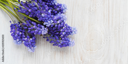 Fototapeta  Muscari flowers on a wooden bleached background, top view, flat layout