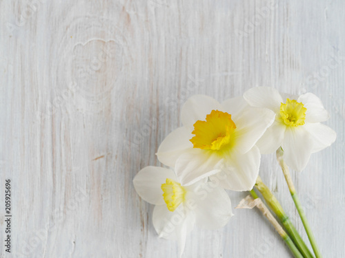 Fotografie, Obraz  Flowers of daffodils on a wooden bleached background, top view, flat layout