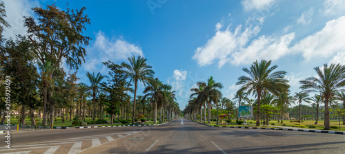 Poster Palmier Panoramic view of asphalt road framed by trees and palm trees with partly cloudy sky in a summer day, Montana public park, Alexandria, Egypt