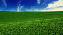 Abstract Natural Idyllic Background With Green Grass And Cloudy Blue Sky
