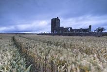 Fields Of Wheat Ears Around Ba...