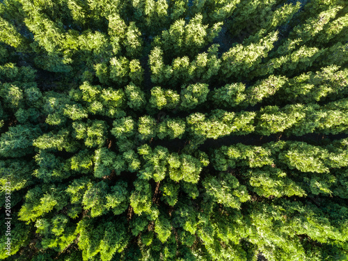 Wall Murals Forest Top view of a green forest. Natural background. Drone photographу