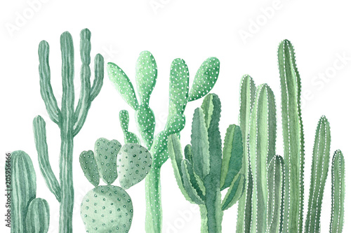 Watercolor Cactus and Succulents Wallpaper Mural