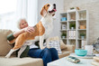 Portrait of happy senior woman stroking gorgeous beagle dog standing on her lap while enjoying weekend at home sitting on comfortable couch in modern apartment, copy space
