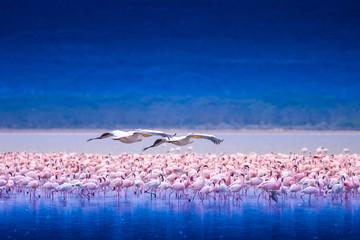 Panel Szklany Podświetlane Do kuchni Africa. Kenya. Lake Nakuru. Flamingo. Flock of flamingos. The nature of Kenya. Birds of Africa.