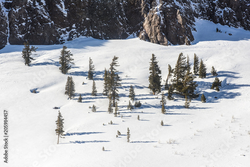 Fotografie, Obraz  View of the snow-covered hill with pine trees in Mammoth Lakes, California