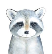 Raccoon Character Portrait. Ha...