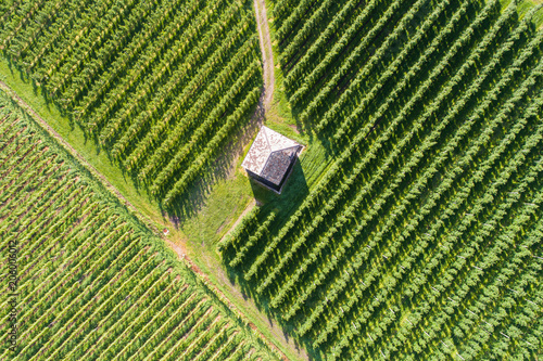 Vineyard and little house view from above. Aerial view - Valtellina