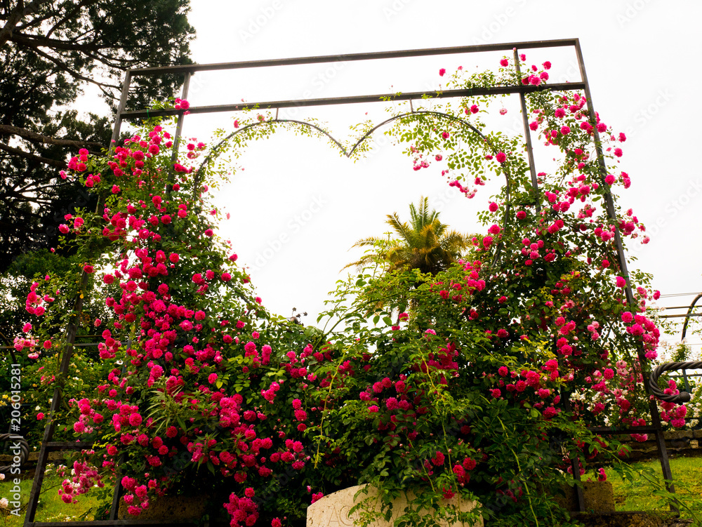 Heart Of Roses To Make Selfie At The Rose Garden In Rome Buy This Stock Photo And Explore Similar Images At Adobe Stock Adobe Stock