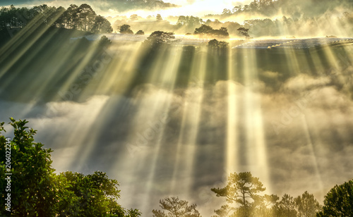 Poster Rivière de la forêt Sunrise over hillside a pine forest with long sun rays pass through valley with pines yellow sunny mornings this place more lively, warm and tranquil welcome to beautiful new day