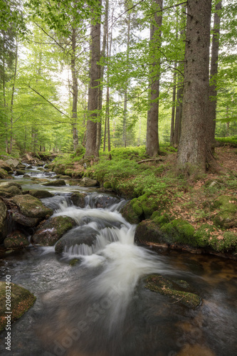 Aluminium Prints Forest river Kleine Ohne, Bavarian Forest, Bavaria, Germany