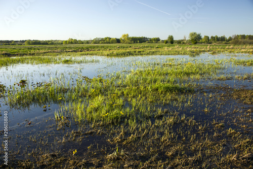 Grass on wet meadows Canvas Print