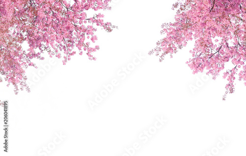 Deurstickers Kersenbloesem Cherry blossom frame use as background