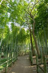 Fototapeta Bambus すずめのお宿緑地公園