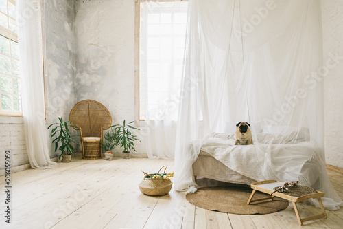 Sunny Skandinavian style interior bedroom. Wooden floor, natural materials, dog pug sitting on the bed