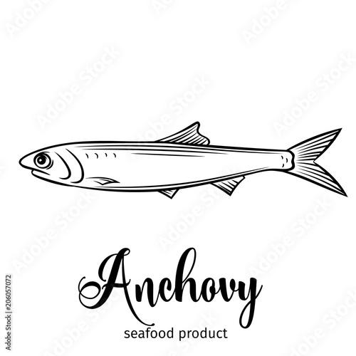 Photo Vector anchovy.