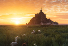 Sunrise At Mont Saint-Michel I...