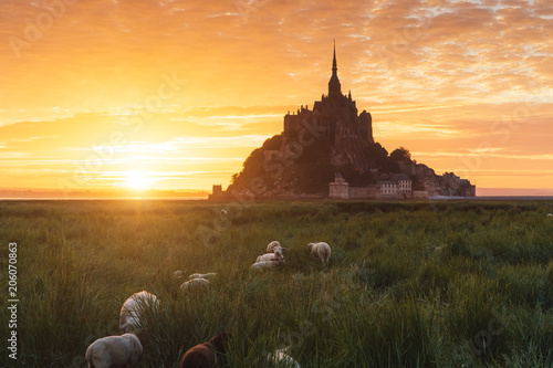 Fotobehang Oranje Sunrise at Mont Saint-Michel in France with sheeps in the foreground