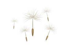 Floating Dandelion Seed, Realistic, Isolated. Flying Parachutes Of Different Sizes. Vector Illustration