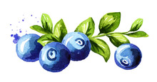 Blueberry Composition. Fresh B...