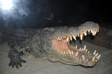 Crocodile Danger In Water, Att...