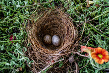 Bird Nest With Eggs In Spring