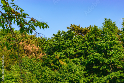 Wald mit Bäumen und blauen Himmel © Michal Otrzonsek