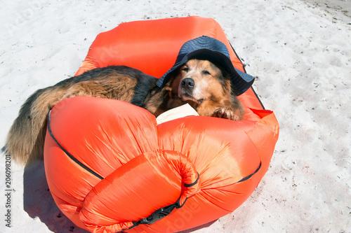 Valokuva  Hund am Strand mit Hut liegt in einer Luftmatratze im Sand