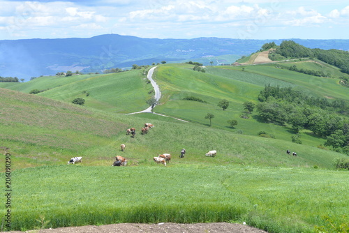 Food,Flowers,Hen,farm,agricolture,grass,farmaland,eggs,animals,panorama,wood,