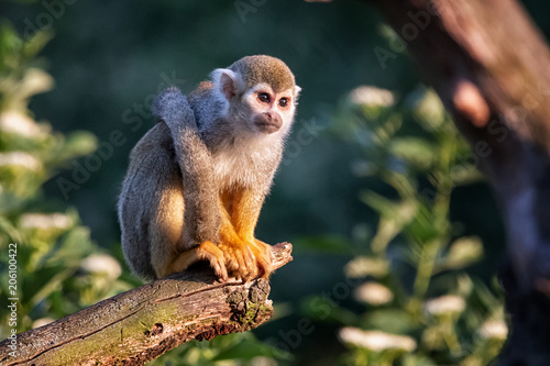 Tuinposter Aap Monkey